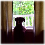 doggy-in-the-window